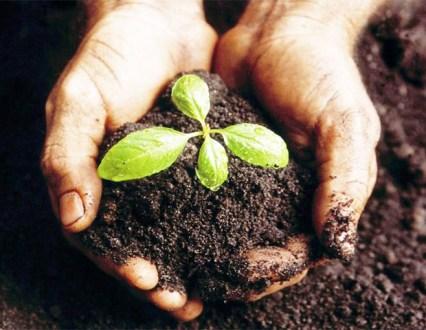 semear-colher