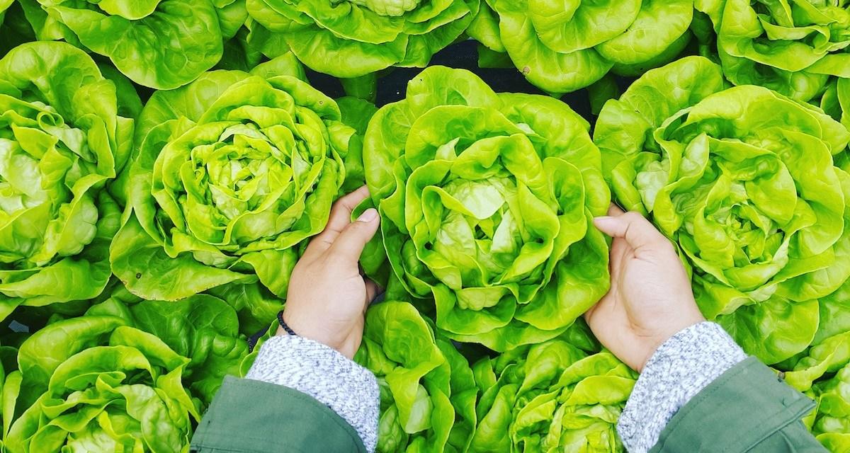 多吃高麗菜、花椰菜等十字花科蔬菜可能有助降低胃癌發生風險?