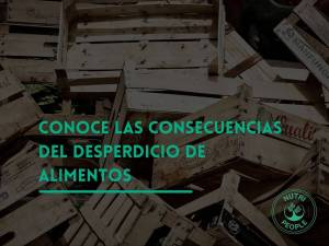 consecuencias del desperdicio de alimentos