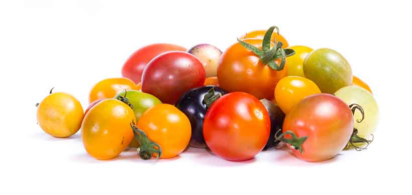 Colorful Cherry Tomatoes in a Variety of Different Colors.