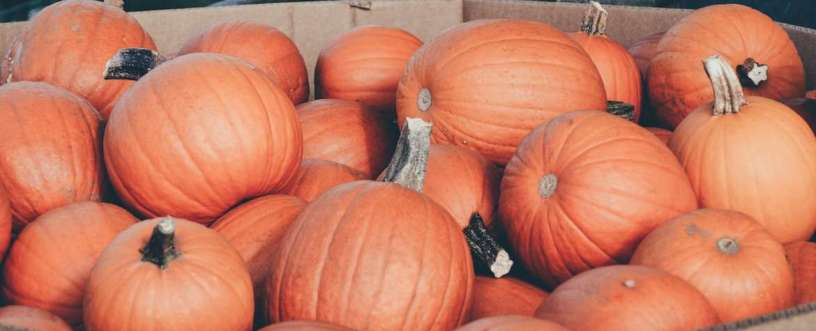 Pumpkins Explained: Nutrients, Health Benefits & How To Prepare