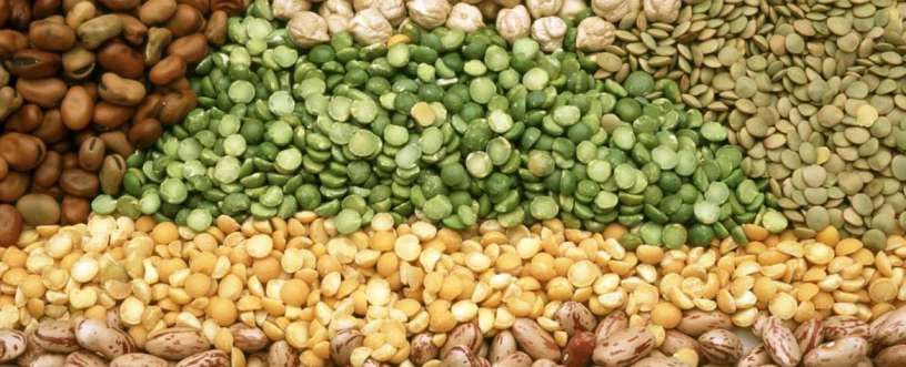 Health Benefits Of Legumes & Beans: Nutrients, Fiber & Disease Prevention
