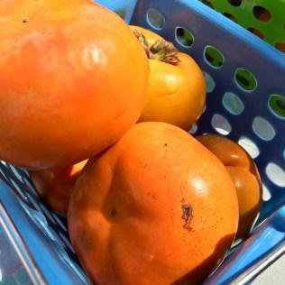 Whole persimmon