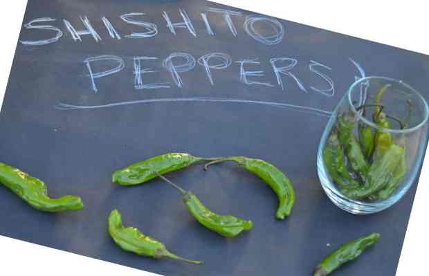 raw shishito peppers