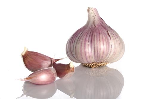 garlic-bsp