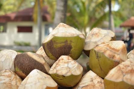 Coconuts for sale at a market