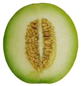 Cross section of honey dew