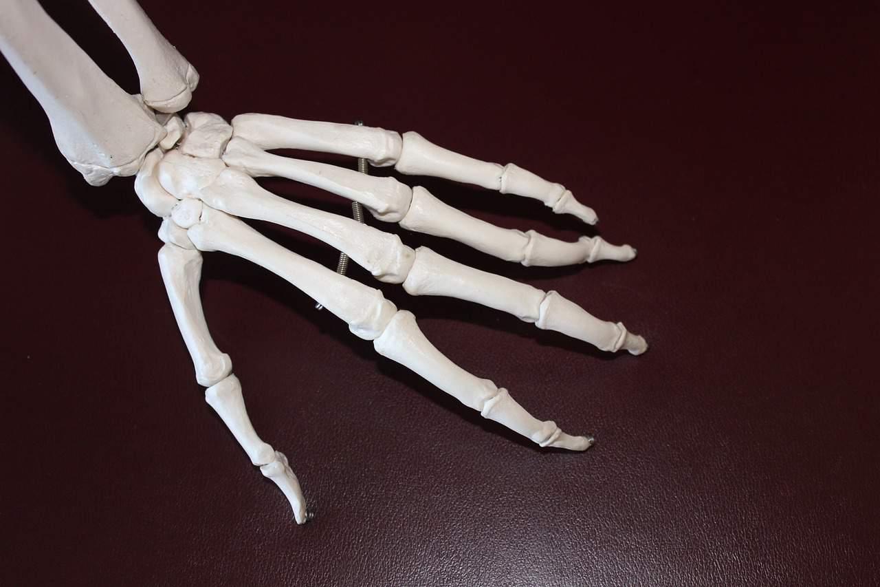 Skeleton hand, concept of bone health