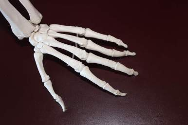Skeleton hand, concept of bone health