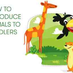 8 ways to introduce animals