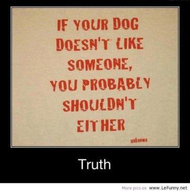 Dog Like