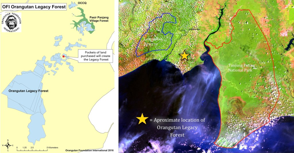 OFI-Orangutan-Legacy-Forest-Map-Views
