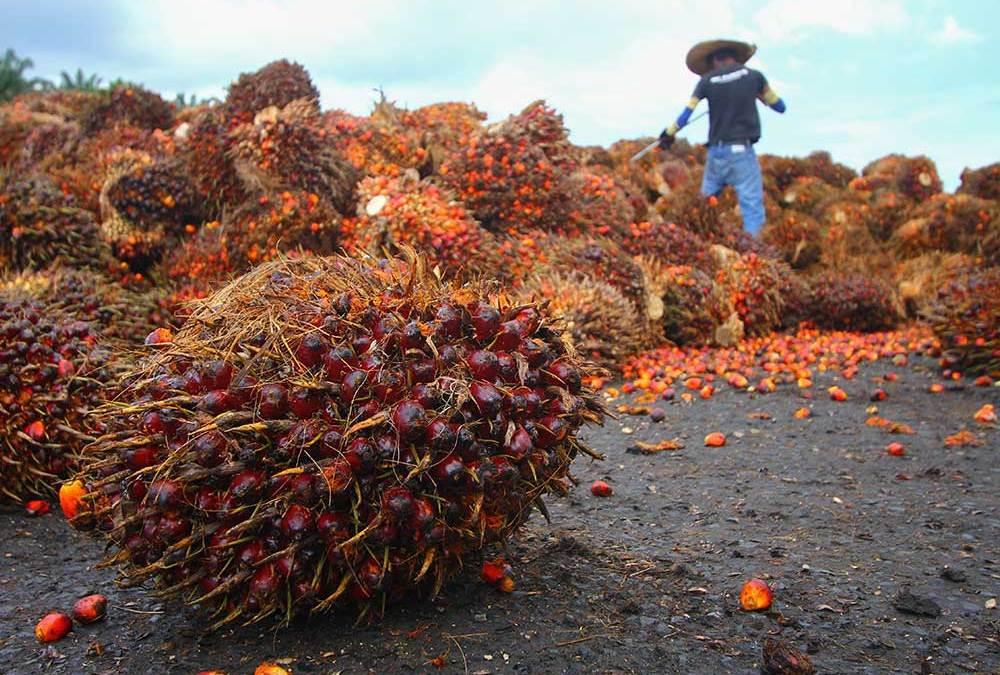 FAQ Palm Oil