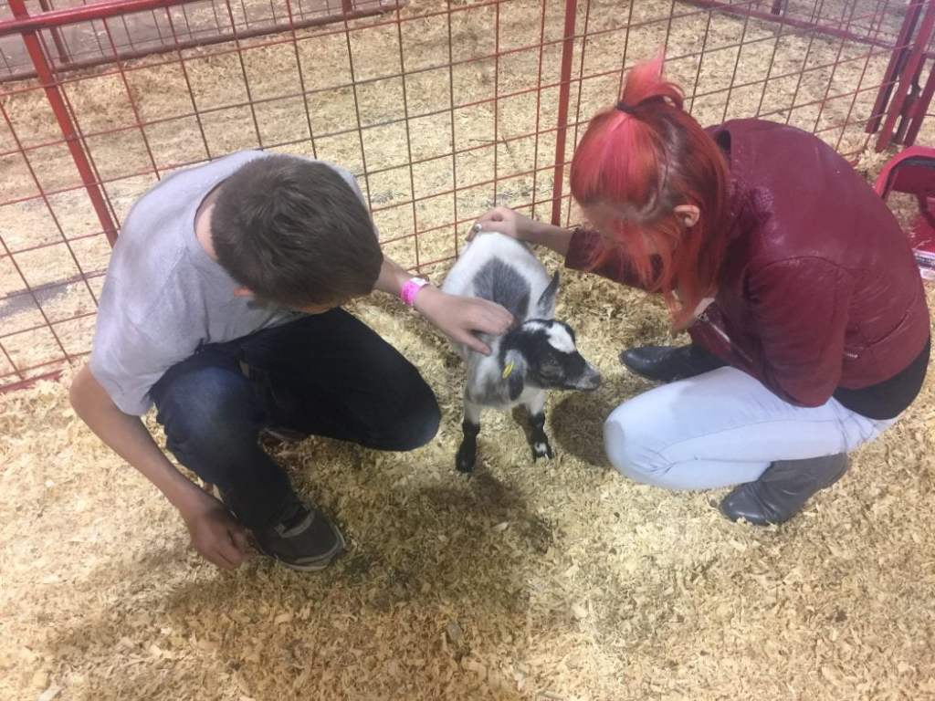 My kids at the Heart of Texas Fair Petting Zoo