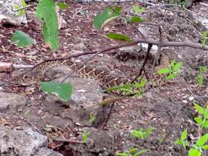 rattlesnake-dana-peak-park-texas-hiking