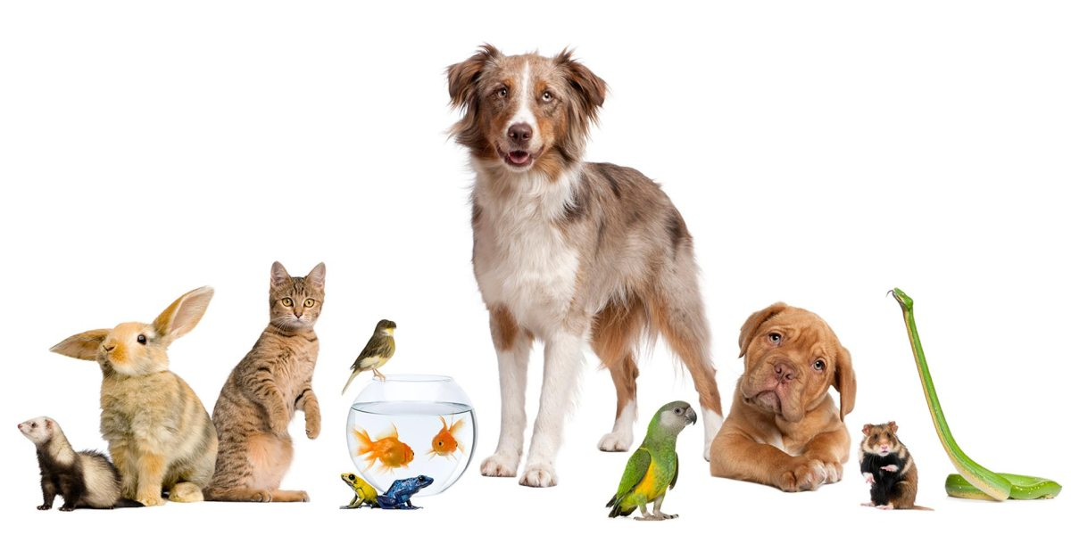 animaux compagnies