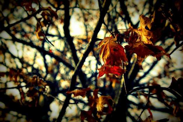 Зима откладывается: в ближайшие дни узбекистанцев ждет теплая погода
