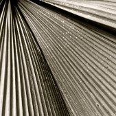 Stripes by Kathy Kautter Copyright © 2014