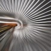 Steel Nautilus by Thomas Simpson Copyright © 2014