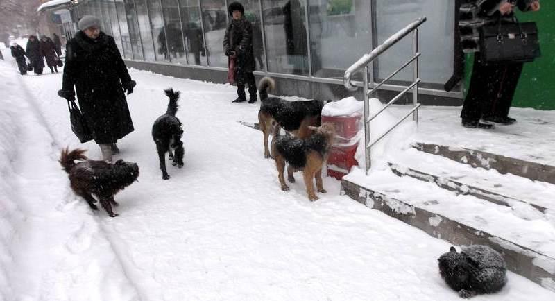 Стих про собак Медногорска