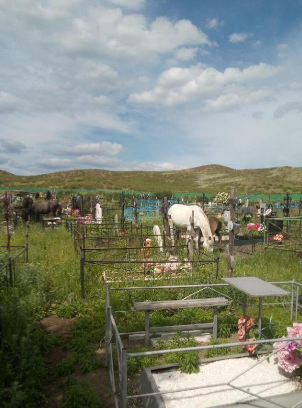 Кони на кладбище