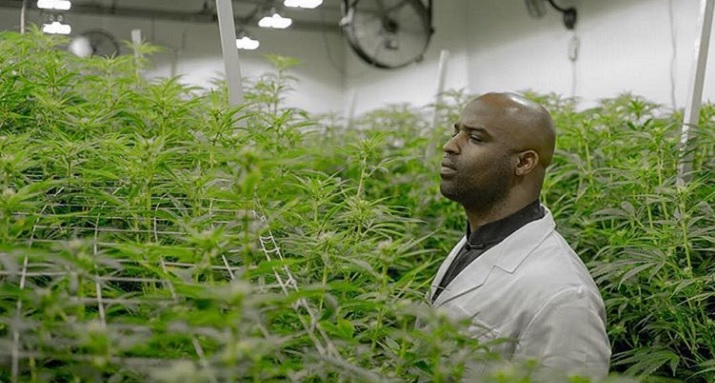 Image result for ricky williams marijuana