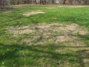 grass after winter