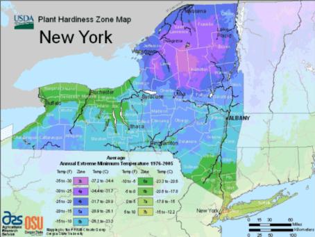 plant hardiness zone map USDA for New York