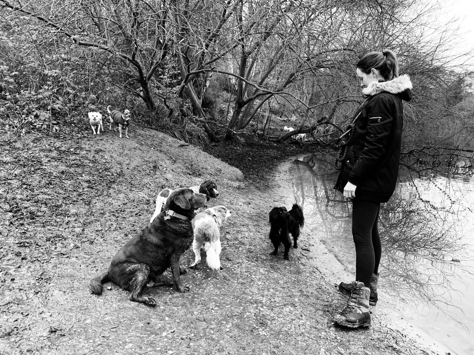 dog walker dog sitter puppy visits dog boarding nw3