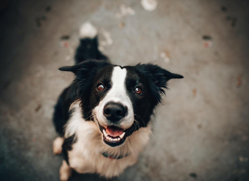 Dog Walker Dog Sitting House Sitting Puppy Sitting North London NW3 Hampstead Belsize Park Hampstead Heath Primrose Hill NW6 NW8 NW11 Group Walks