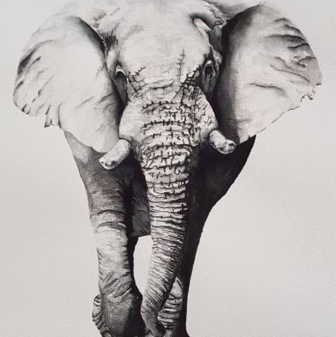 LP_Elephant_3