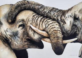 LP_Elephants wrestling