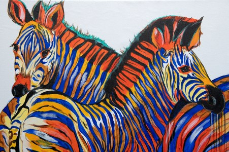 Zebra Pair Blue Orange Closeup
