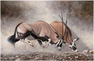 Botsende horens door Danie Marais toont Gemsbokken in gevecht voor dominantie
