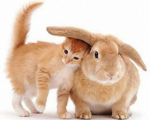 Year Of The Cat Or Year Of The Rabbit