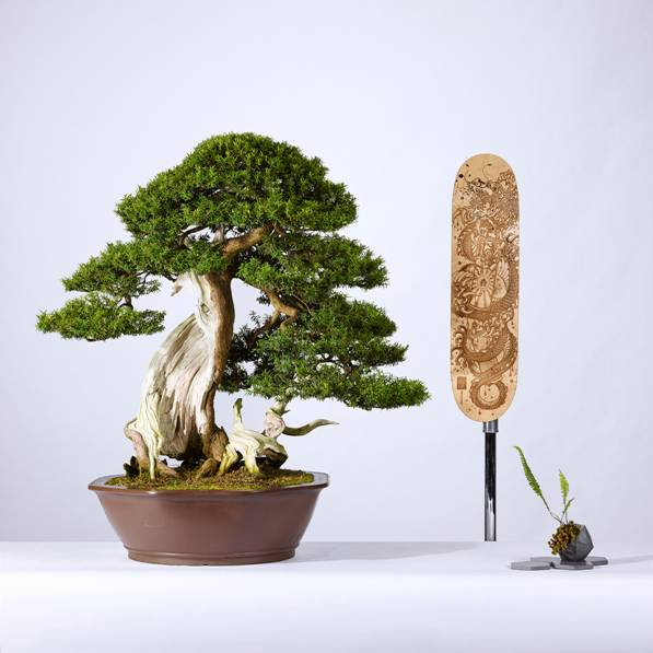 A&E BONSAI1