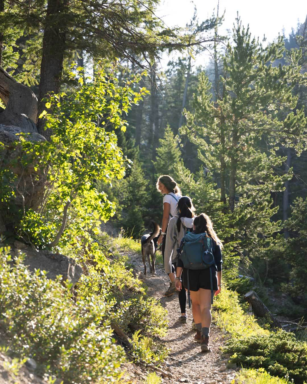 A young family – A mother, two daughters, and their dog – are hiking through a forest in the northwest United States.