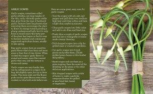 Garlic Scapes recipe