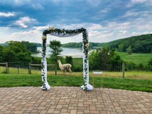 Wedding venue with lake and llama in background