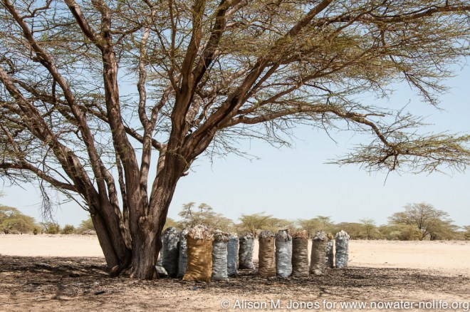 Africa:  Kenya; North Rift District, Turkana Land, bags of charcoal for sale