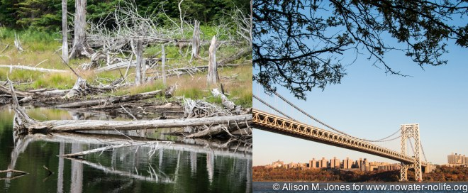 The Hudson River rises in pristine forests and enters tidal waters under heavily-trafficked urban bridges.