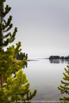 USA: Wyoming, Mississipppi River Basin, Yellowstone National Park, Fishing Bridge, looking south into Yellowstone Lake from Yellowstone River