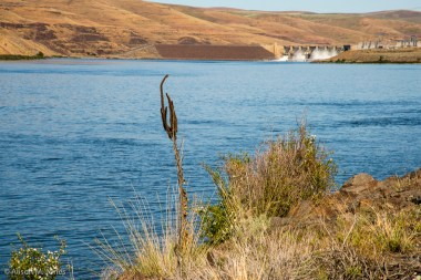 USA: Washington, Palouse,  downstream of Little Goose Lock and Dam, USACE hydro and run-of-the-river dam on the Snake River