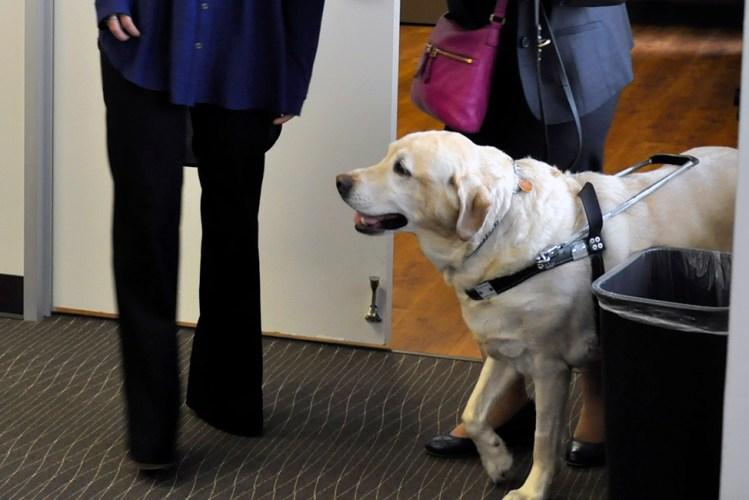lA service dog at WSBA