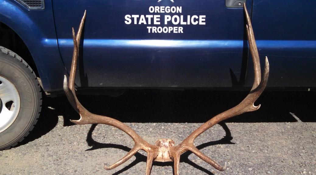 Enterprise man sentenced for poaching trophy zumwalt bull elk for Fish and wildlife management degree