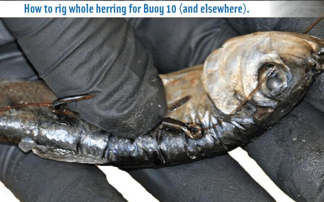 Hook up whole herring