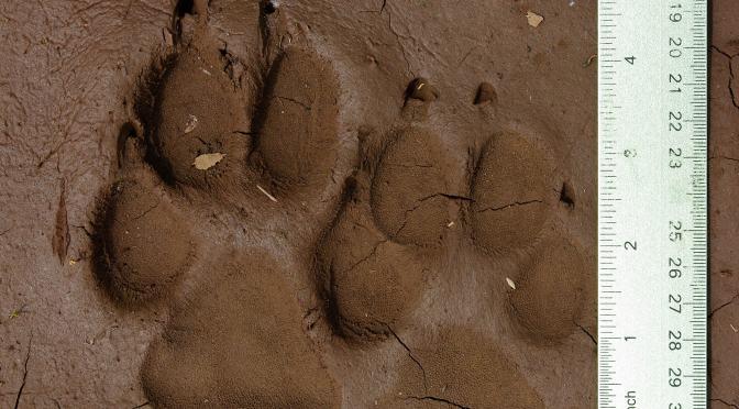a9a2d58959ef56 Brown Reported  Confident  In Investigation Of Oregon Elk Hunter s ...
