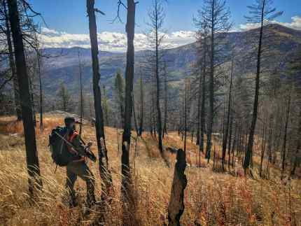 Washington 2019 Rifle Deer Season Prospects