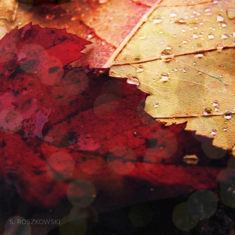 Rainy Autumn - 8x8 Photograph