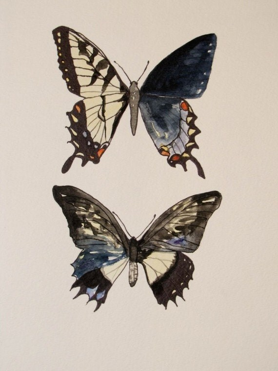 Gynandromorph Study No.1 Limited Edition -8x10 Giclee Print